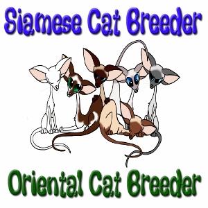 PRA in Siamese Cats