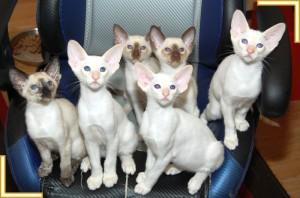 advertising kittens