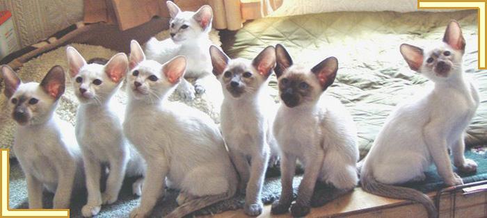 advertising kittens online