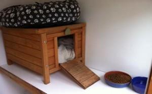 outdoor cat run quarters
