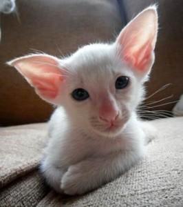 making cats pedigrees