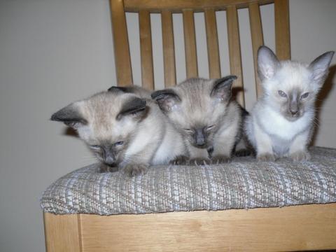 Socialising Kittens