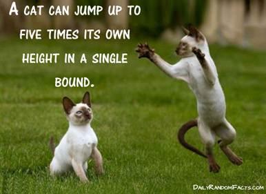 cats-jump-high