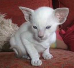hand reared kitten