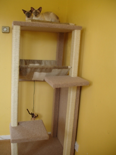How to make a cat scratching post siamese cats and kittens for How to make a cat tower