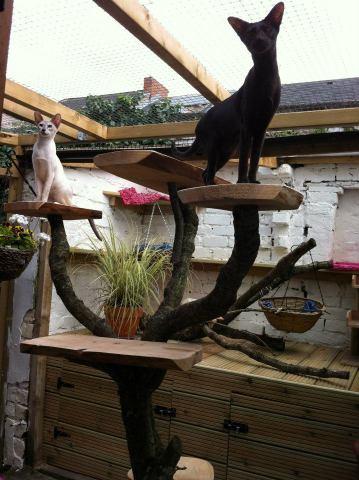 outdoor-cat-tower