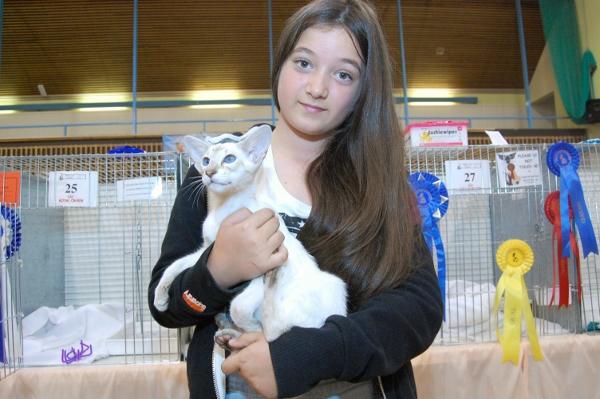 Siamese Cat Association Pictures 2013
