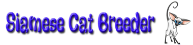 Siamese cats and kittens for sale