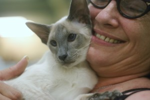 Top Ten Questions to ask a Siamese Cat Breeder