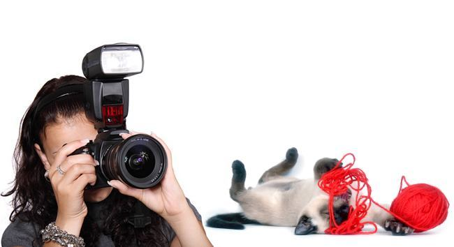 Photograph Your Cat Like a Paparazzi Pro