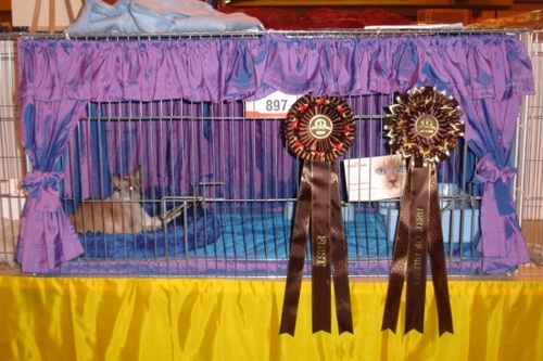 How To Make Your Own Cat Show Drapes